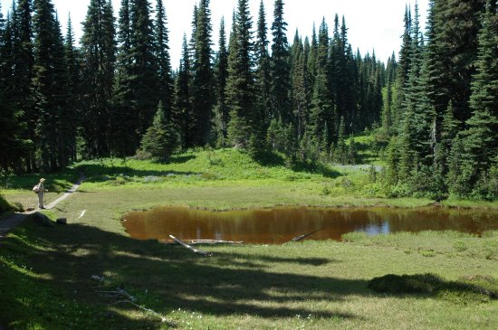 A pond amid the alpine forest