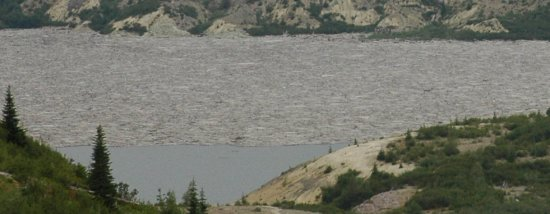 logs on lake