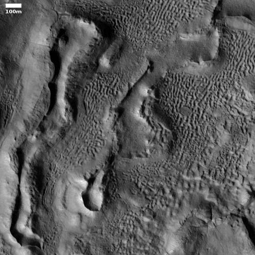 Brain terrain and bisected ridges on Mars