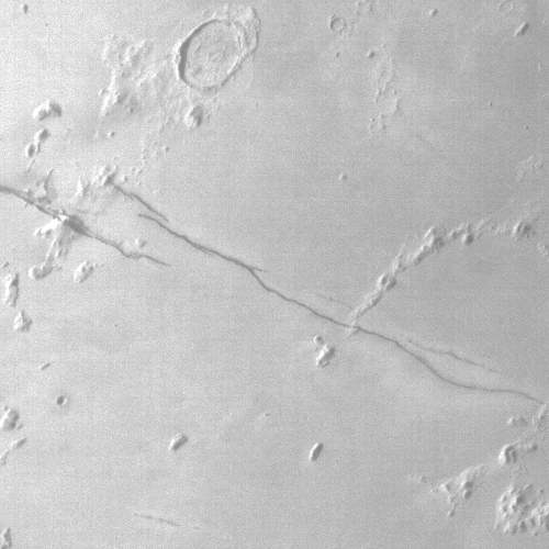 Cerberus Fossae, as seen by Al-Amal